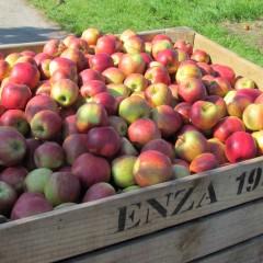 Eerste leerjaar op bezoek bij appelboer 'Roes'