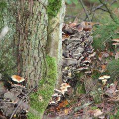 Herfstwandeling in het Bos van Bo